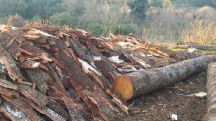 Madeireira é fechada e proprietário autuado por crimes ambientais em Abelardo Luz