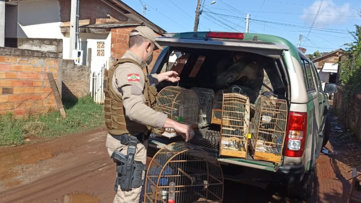 Após operação PMA apreende aves nativas silvestres em SC