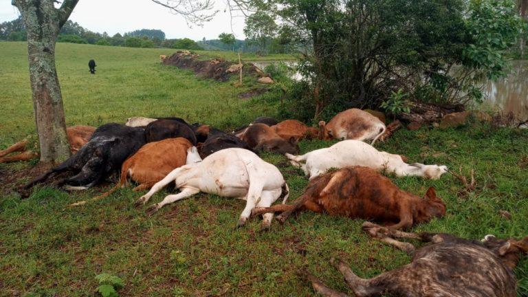 Raio mata 19 cabeças de gado no interior do RS