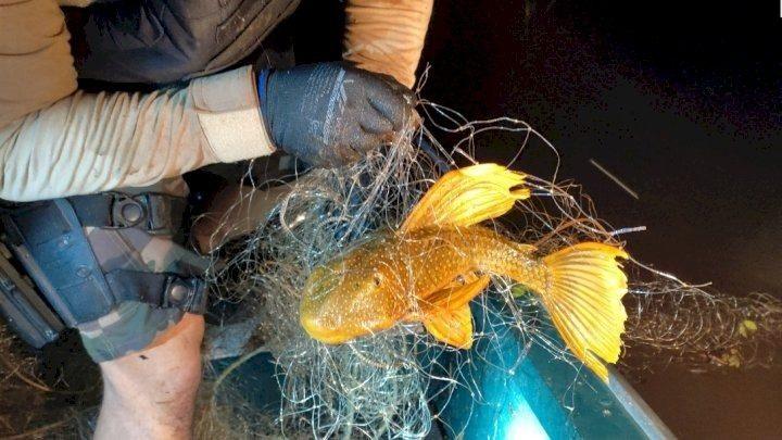 PMA apreende 1.900 metros de rede de pesca em Palmitos